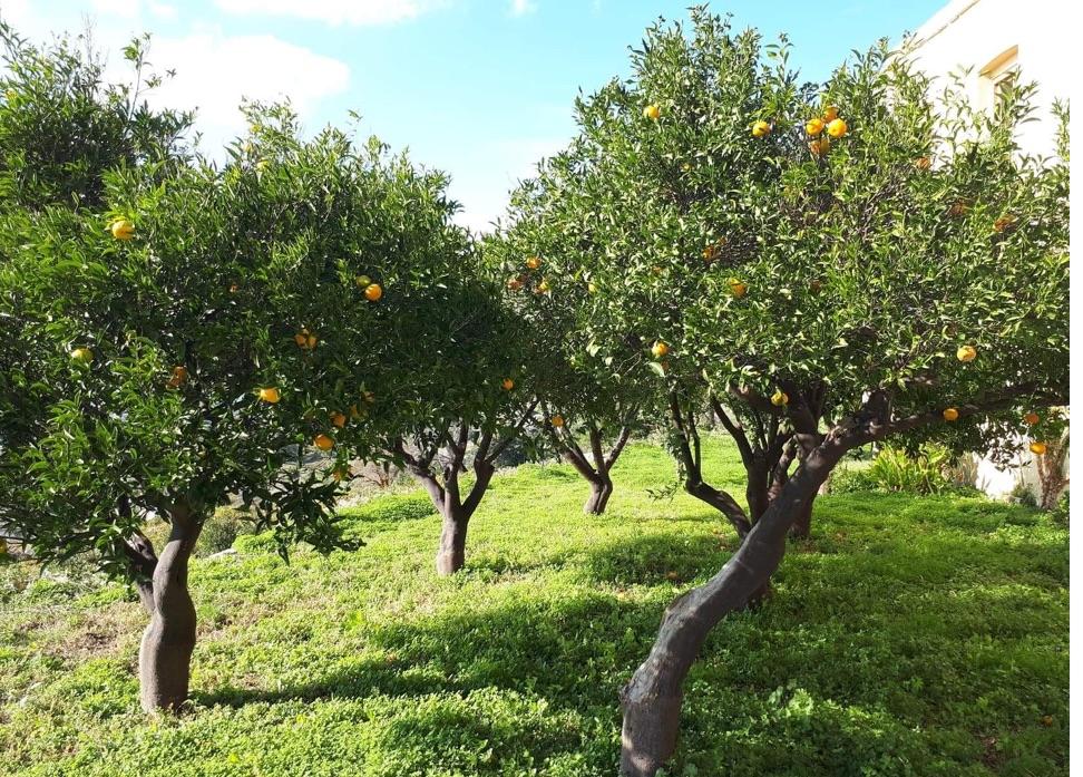 montofoli-gardens-1